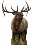 Museum of Natural History Big Rack Elk Wild Forest Animal Wall Sticker
