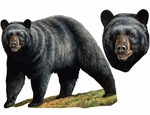 Museum of Natural History Black Bear Wild Animal Wall Stickers