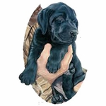 Museum of Natural History Black Labrador Puppy Wall Stickers