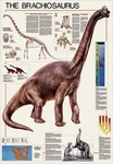 The Brachiosaurus Poster