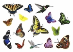 Butterfly Wall Stickers Collection