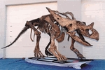 Chasmosaurus belli Skeleton