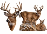 Museum of Natural History Deer Animals Group Wall Stickers