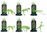 Glow in The Dark Dinosaur Bones Fossil Replicas Skeletons Kits, 12 Sets