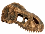 T-rex Skull Dino Dig Party, 6 inch