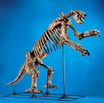 Eremotherium Laurillardi Giant Ground Sloth Skeleton