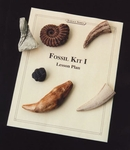 Clasroom Fossil Kit Cave Bear tooth, Trilobite, Ammonite, Saber tooth, Dinosaur Claw, Crinoid