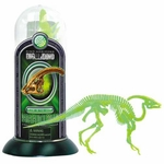 Glow in The Dark Dino Parasaurolophus Bones Skeleton Puzzle Kit