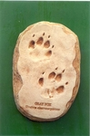 Gray Fox Footprint