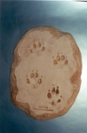 Gray Fox Footprint Replica