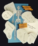 Human Traces, Classroom Fossil Kit