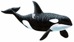 Large Orca Killer Whale Wall Sticker