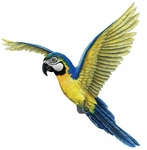 Macaw Wall Sticker