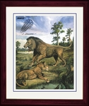 "Panthera leo atrox - Framed Picture 17"" x 14"""