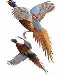 Museum of Natural History Pheasants Animals Group Wall Stickers