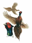 Museum of Natural History Pheasants Heads Wild Birds Wall Stickers