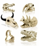 SPECIAL OFFER Prehistoric Skulls Models, 3""