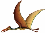 "Large Flying Dinosaur Reptile Quetzalcoatlus Wall Decal 41"" x 30"""