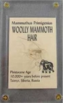 Real Collectible Woolly Mammoth Hair