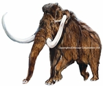 Small Woolly Mammoth, Pleistocene, Wall Decal, 12""