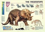 The Triceratops Poster