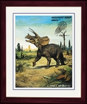 "Triceratops, Framed Picture, 17"" x 14"""