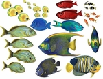 Tropical Fish Combo Pack Wall Stickers