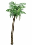 Large Tropical Palm Tree Wall Sticker
