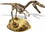 Velociraptor Skeleton Model Kit Scale Replica, 25""