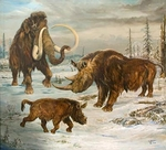 "Woolly Mammoth, Coleodonta, 30"" x 30"", Giclee on Canvas"