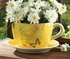 Teacup Planter Garden Butterfly Yellow