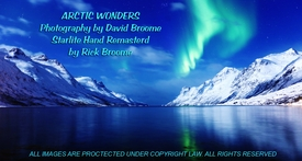 Arctic Wonders: Individual Pieces