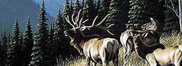 Moose Quot Morning Call Quot Rear Window Decal Xxx020150 Series