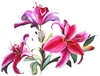 SALE! Beautiful Pink Lily Plus Size & Supersize T-Shirts S M L XL 2xl 3xl 4x 5x 6x 7x 8x  (Lights Only)