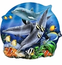 In the Sea & Pond!<br>Dolphins Whales Fish