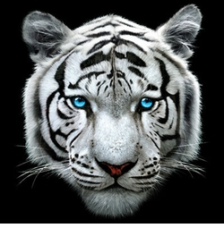 SALE! 3D White Tiger Face Plus Size & Supersize T-Shirts S M L XL 2x 3x 4x 5x 6x 7x 8x (All Colors)