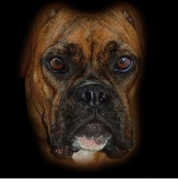 SALE! Big Brindle Boxer Face Plus Size & Supersize Dog T-Shirts S M L XL 2x 3x 4x 5x 6x 7x 8x (All Colors)