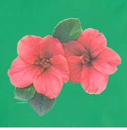 FINAL SALE! Mini Red Hibiscus on on Shamrock Green Plus Size T-Shirt 2x 3x 4x