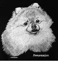 SALE! Pomeranian Dog Portrait Plus Size & Supersize T-Shirts S M L XL 2x 3x 4x 5x 6x 7x 8x (All Colors)