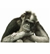 Primates!<br>Monkeys Chimps Apes
