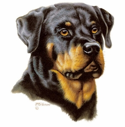 SOLD OUT! Adorable Rottweiler Plus Size & Supersize Dog T-Shirts S M L XL 2x 3x 4x 5x 6x 7x 8x (Lights Only)
