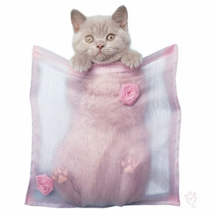 SOLD OUT! Pocket Kitten! Barnaby Plus Size & Supersize T-Shirts S M L XL 2x 3x 4x 5x 6x 7x 8x (Lights Only)