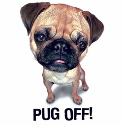 SALE! Pug Off! Plus Size & Supersize Dog T-Shirts S M L XL 2x 3x 4x 5x 6x 7x 8x (Lights Only)