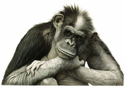 SOLD OUT! The Thinker! Adorable Chimp Monkey Plus Size & Supersize T-Shirts S M L XL 2x 3x 4x 5x 6x 7x 8x