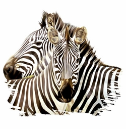SALE! Zebra Nuzzling! Two Zebras Snuggling Plus Size & Supersize T-Shirts S M L XL 2x 3x 4x 5x 6x 7x 8x