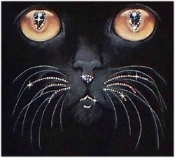 SOLD OUT! Rhinestone Cat & Whiskers Plus Size & Supersize T-Shirts 4xl 5xl