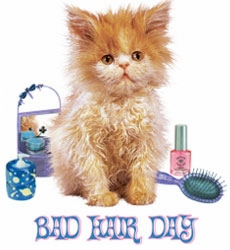 SALE! Cute Kitten Bad Hair Day Plus Size & Supersize T-Shirt! S M L XL 1x 2x 3x 4x 5x 6x 7x 8x