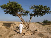 Frankincense in Oman from The Travel Channel