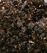 Guggul Resin & Powder(Commiphora mukul) - India