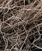 Vetiver Root - India